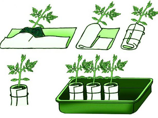 Китайський спосіб вирощування цибулі