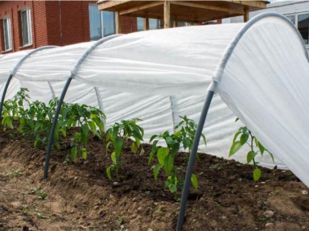 Фитоверм - для захисту рослин від шкідників
