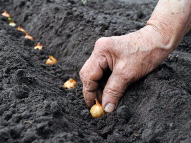 Что может расти на грядке после клубники