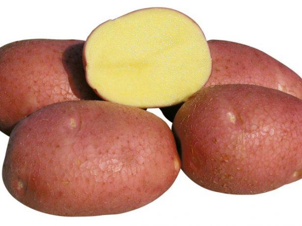 Як посадити картоплю по-китайськи
