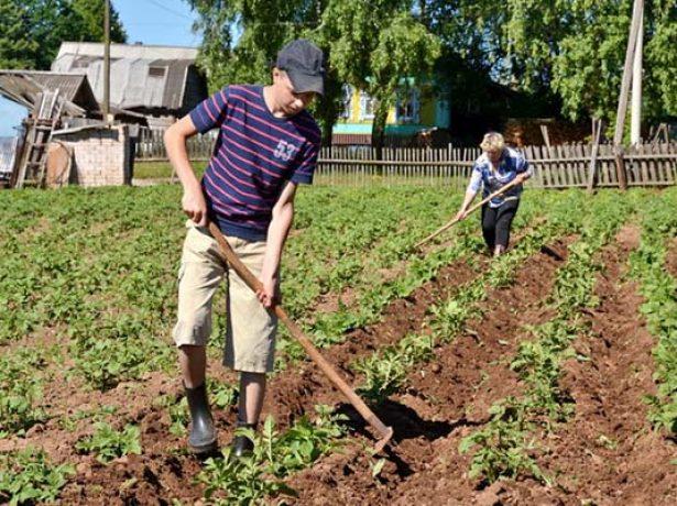 Як виростити рання картопля в будь-якому кліматі