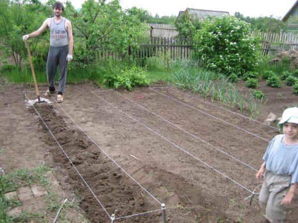 Незвично вузькі грядки і зростання врожайності: вирощування томатів по міттлайдеру