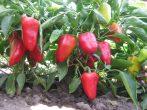 Планування саду: які принципи необхідно знати
