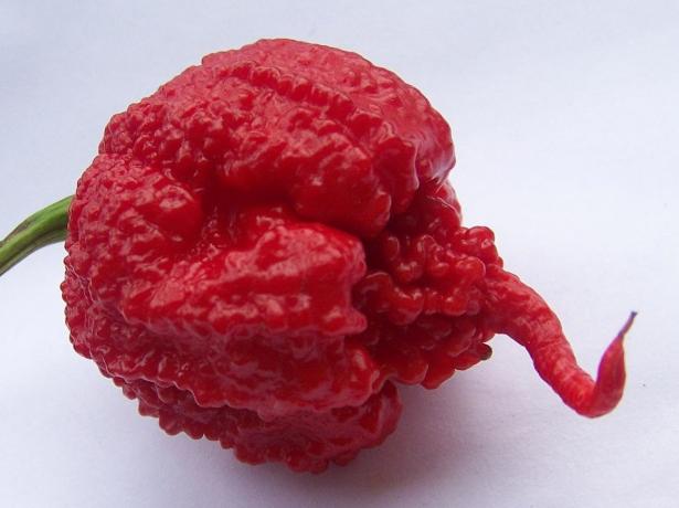 Ornella, ленінградська область Http://www.tomat-pomidor.com/forums/topic/430-%d0%b8%d0%bd%d1%82%d1%83%d0%b8%d1%86%d0%b8%d1%8f-f1/
