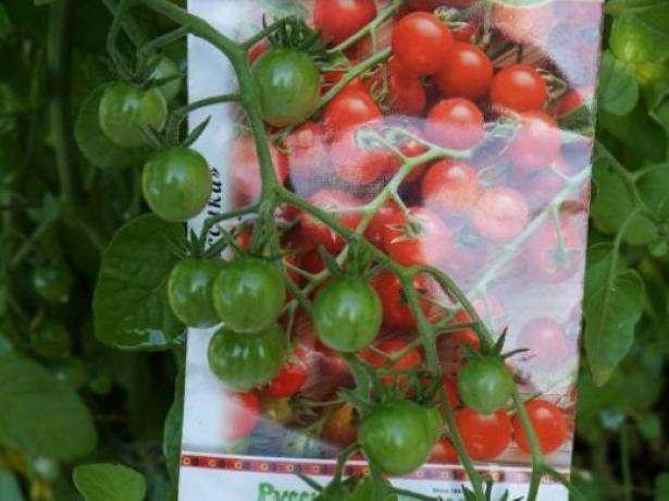 Дюймовочка-красивий і смачний томат черрі