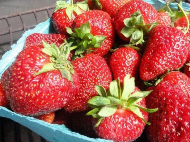 Огірок темп f1: опис гібрида і особливості вирощування