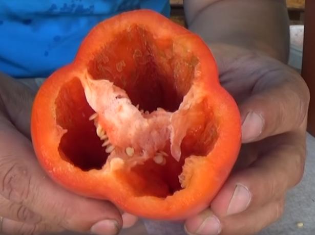 Як вибрати сорт солодкого перцю так, щоб не прогадати