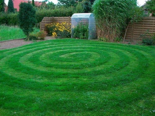 Рулонний або сіяний газон віддати перевагу, і які трави краще вибрати?