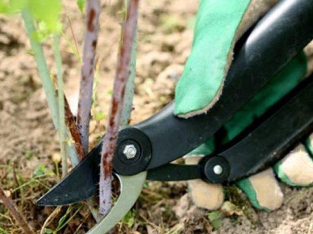Необходимо восполнять. Использовать удобрения начинают с третьего года после посадки. До этого времени дерево потребляет подкормку, внесённую ранее.