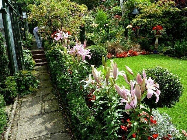 Садові лілії-вибір відповідного місця в саду, особливості посадки та догляду
