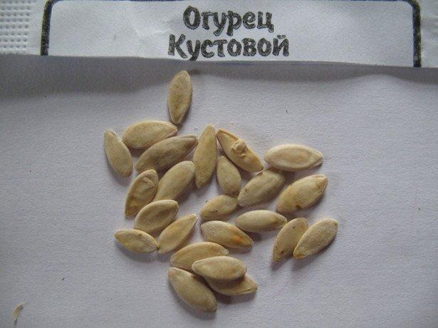 Самостійна заготівля насіння огірків і вирощування з них розсади