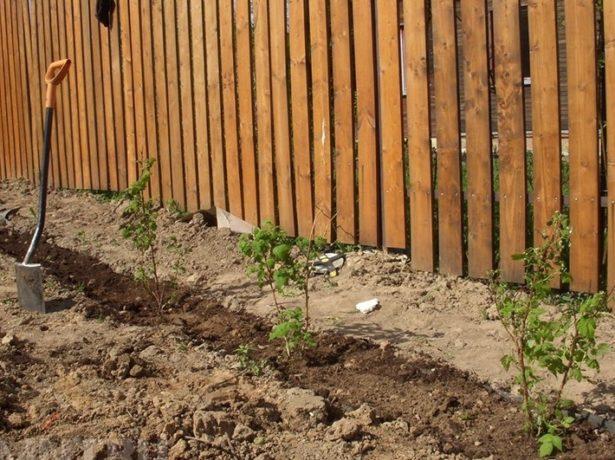 Як правильно виростити огіркову розсаду в домашніх умовах