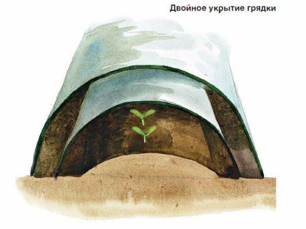 Відкритих грядках можна виростити редис