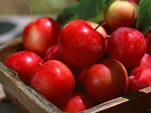 Способи зберігання яблук взимку – як зберегти яблука аж до нового сезону?