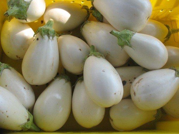 Вибираємо кращі сорти баклажанів від лілових до білих і зелених