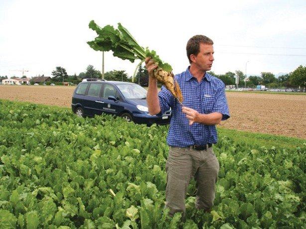 Вирощування цукрових буряків - особливості технології