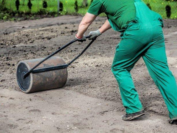 Посадка квасолі і збирання врожаю в покладений термін